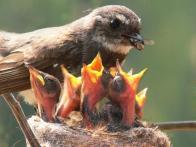 bird-feeding-5