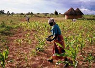 woman fertilizing